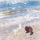 Summertime Seashell by Silken Photography
