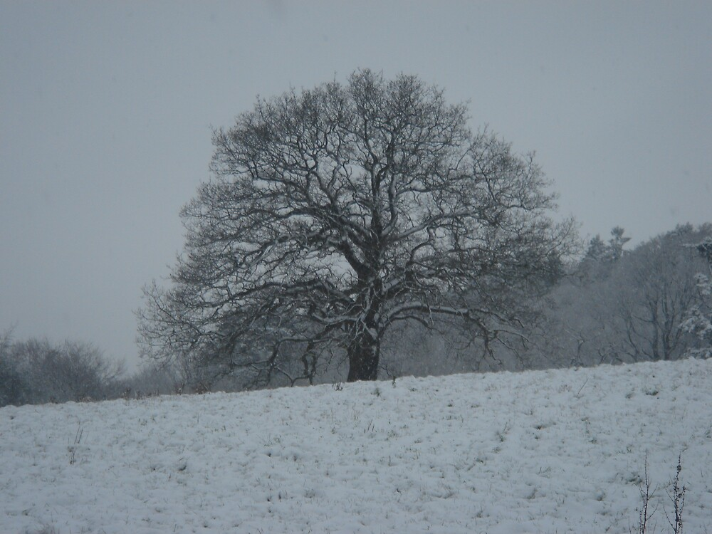 Simple Snow In Surrey by dfryer