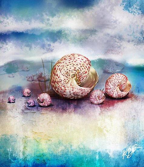 sea shells by © Karin Taylor