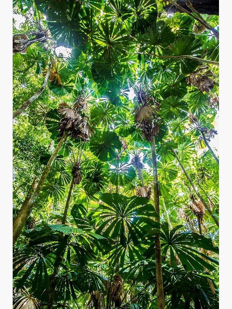 Fan palm forest by DavidWachenfeld
