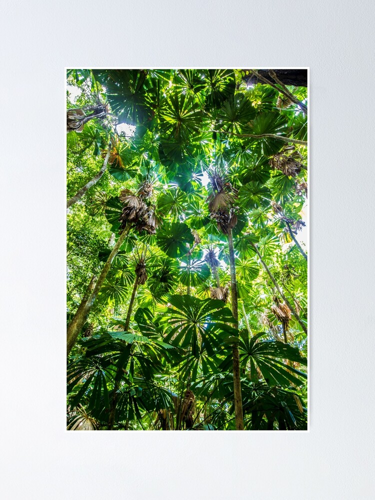 Alternate view of Fan palm forest Poster