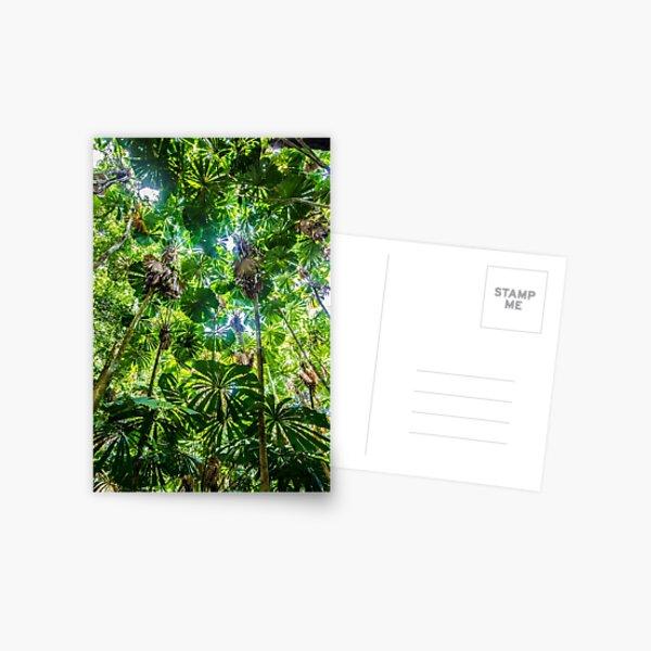 Fan palm forest Postcard