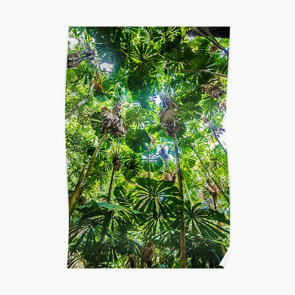 Fan palm forest Poster