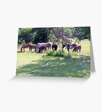 Spring Colts Greeting Card