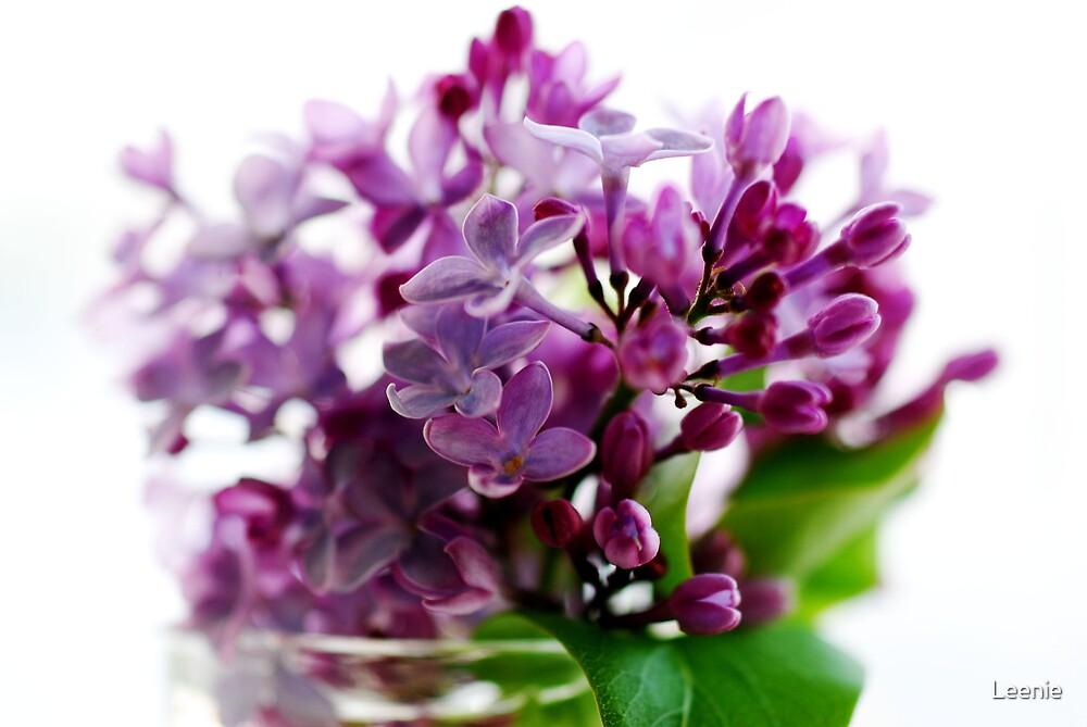 Lilac by Leenie