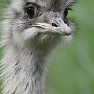 Portrait of a Rhea by ellismorleyphto