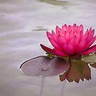 Ruhe in Pink von Celeste Mookherjee