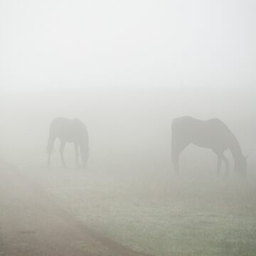 Horses in the Mist by mistygal01