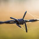 Barb Wire by Laura Sykes