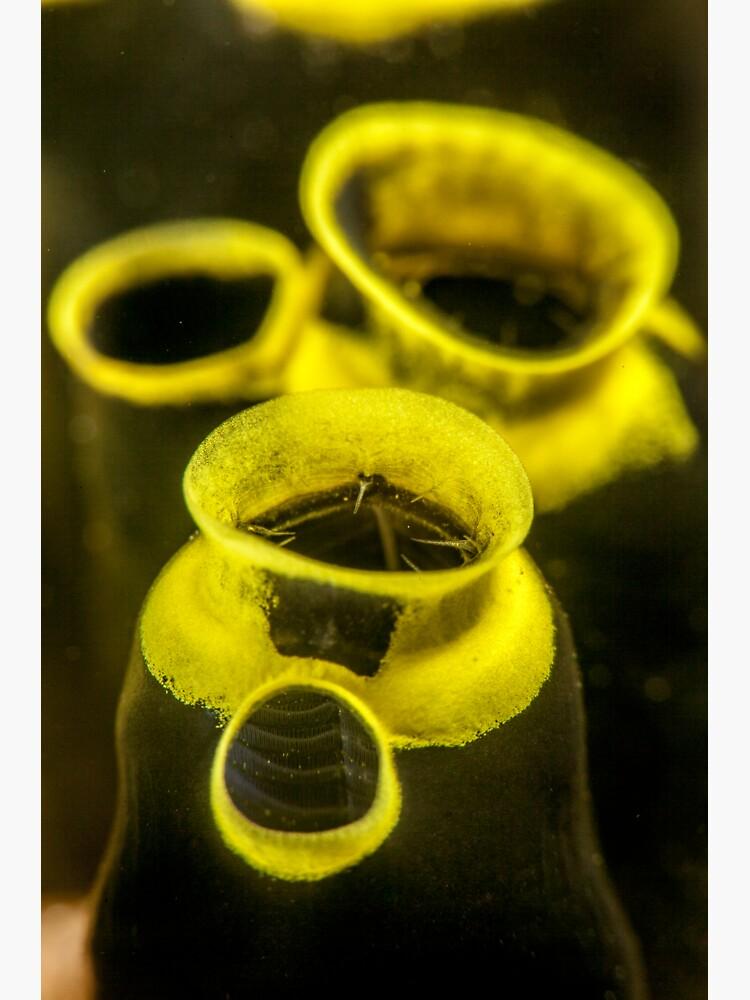 Miniature vases by DavidWachenfeld