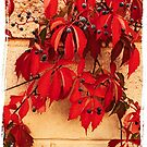 Red Shades of Early Autumn by Rasendyll