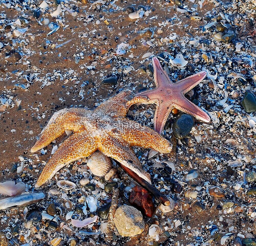 Starfish by shakey