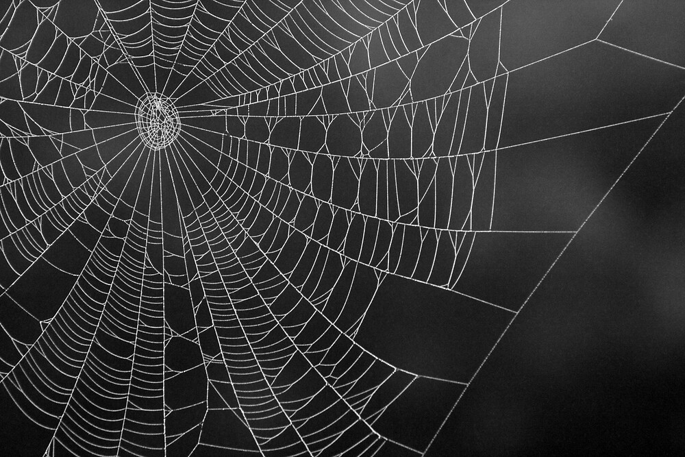 A Spider's Web by AGagnon