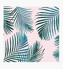 Green Palm Leaves on Light Pink Photographic Print