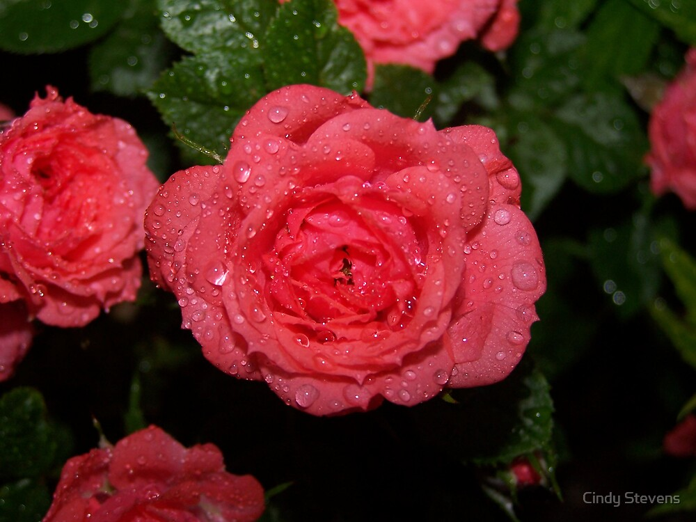 That which we call a rose by Cindy Stevens