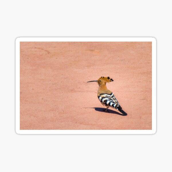 Hoopoe Sticker