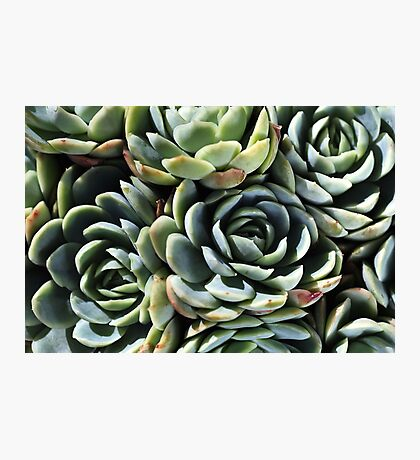 World Of The Succulent Photographic Print