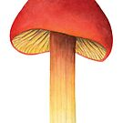 Hygrocybe punicea (Scarlet Waxy Cap) by lifescience