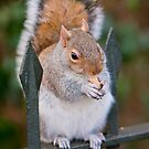 Squirrel of Hyde Park by Andre Gascoigne