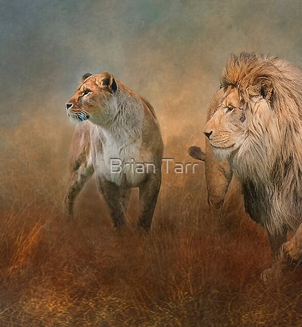 Savanna Lions by Brian Tarr