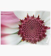 35mm film flower Poster