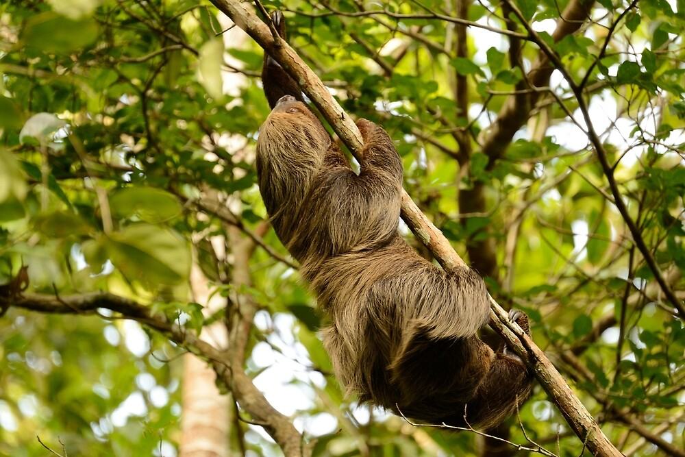 Sloth by Derek McMorrine