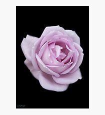 Lilic Rose on Black Velvet Photographic Print