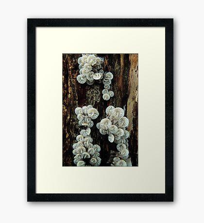 Mycena Fungi II Framed Print