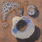 Seashells I by Carole Elliott