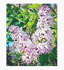 Unique Pink Floral Photographic Print