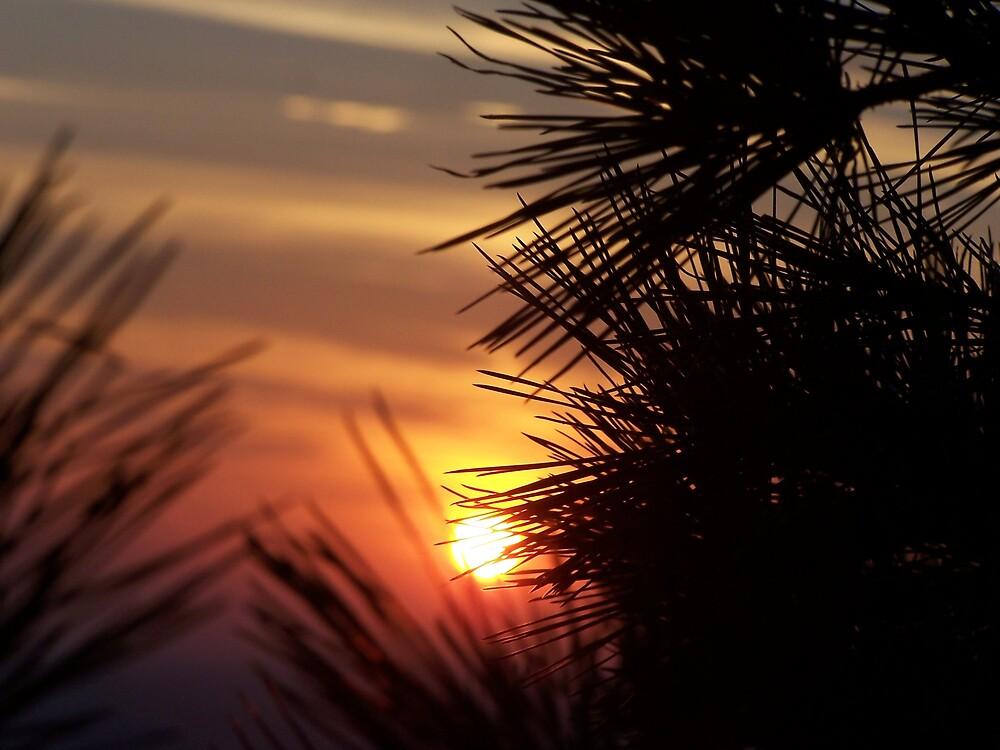 Sunset on Pinnacle Mountain by Jatt2613