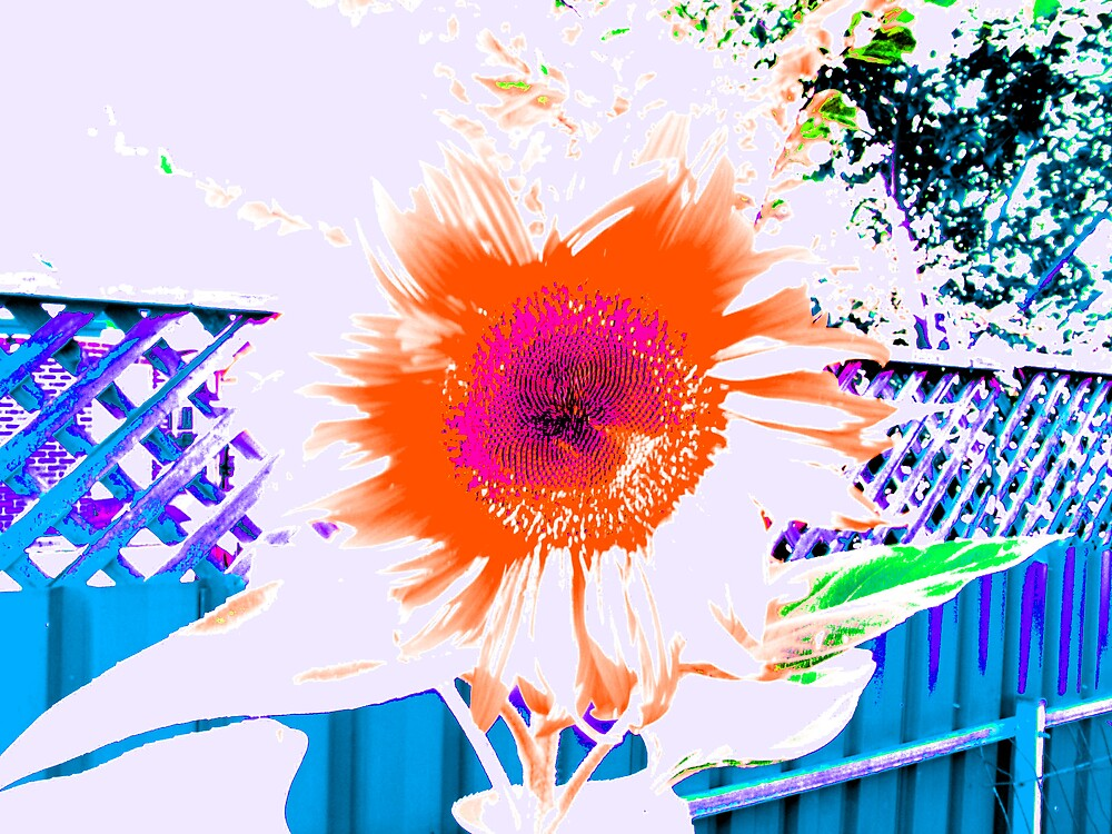 Psychedelic Sun Flower by Ratfingers
