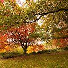 Autumn Colour by SusanAdey