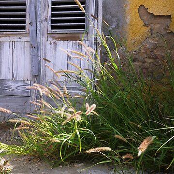 old garden by erozzz
