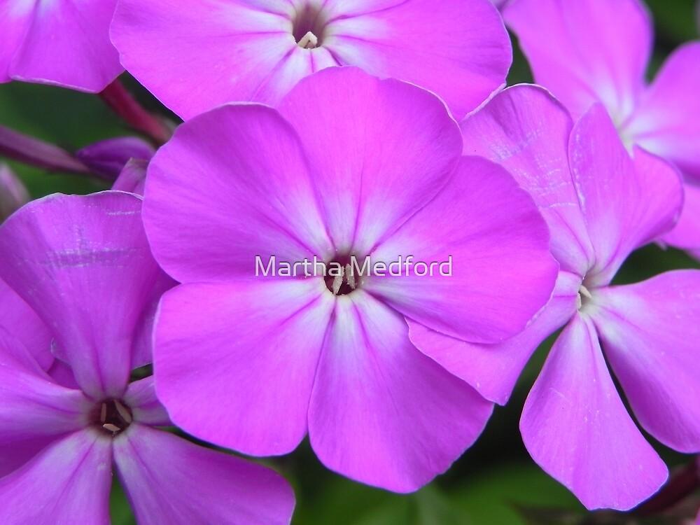 Pink Phlox by Martha Medford