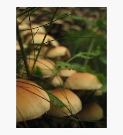 Mushroom cascade Photographic Print