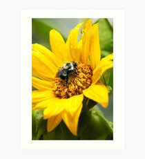 Bee on Sunflower Art Print