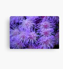 Firework Flowers  Canvas Print