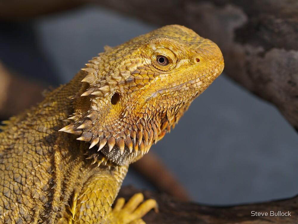 Central Bearded Dragon - Pagona Vitticeps by Steve Bullock