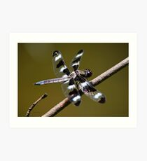 Twelve Spotted Skimmer Dragonfly Art Print