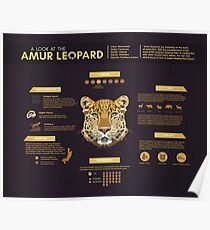 Amur Leopard - Infographic Poster Poster
