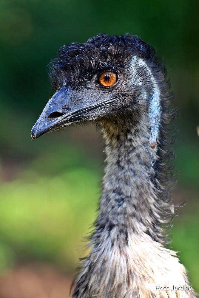 Australian Emu by Ross Jardine