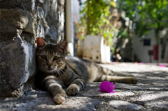Cat lounging in a Turkish old town by Michael Anderson