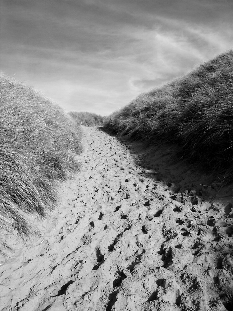 Sand dunes in contrast by David Odd