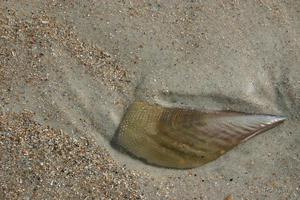 Shell in the Sand by Polygame
