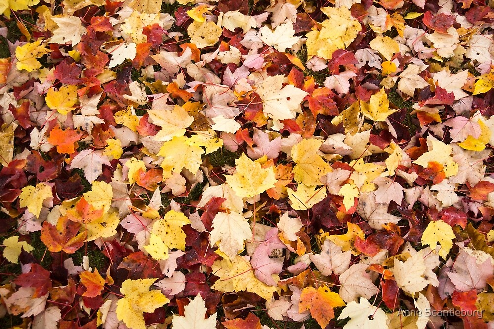leaves in the fall by Anne Scantlebury
