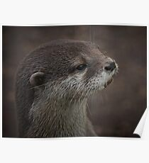 Portrait Of A Young Otter Poster