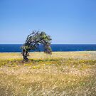 Single Cypriot Tree by Dave Hare