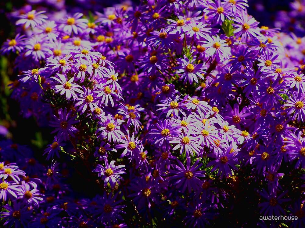 Shades of purple by awaterhouse