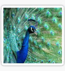 Peacock in bloom Sticker